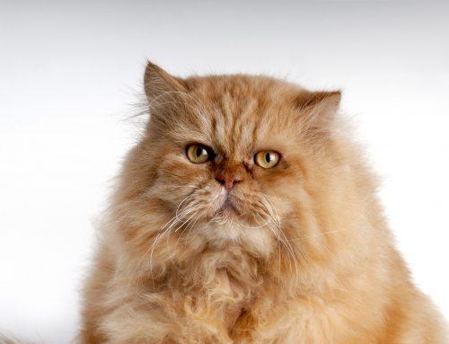 11 maneiras de fazer gatos melhores